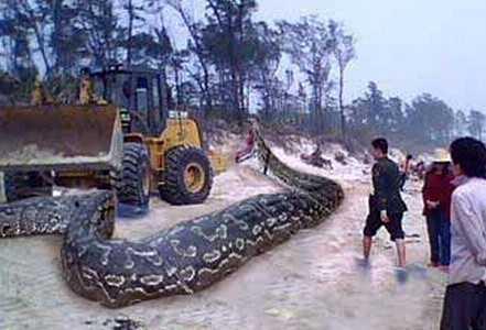 辽宁大蟒蛇 揭秘辽宁挖出140岁大蟒蛇真相